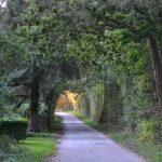 Færden i naturen gavner vores mentale helbred