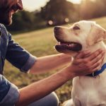 Er du klar til at få en hund?